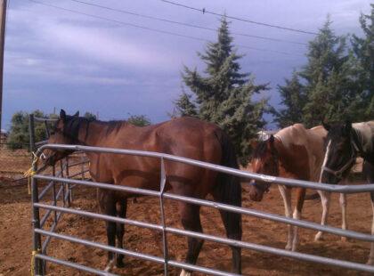 Ranch-Horses-7